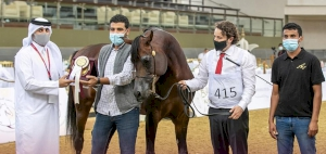 Badie Al Nasser crowned the champion Stallion to close out the 23rd Qatar National Arabian Horse Show