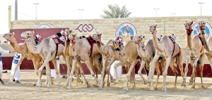 Six winners triumph Day 4 of the HH The Amir Sword Festival for purebred Arabian Camel Festival